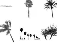 6 Palm tree brushes