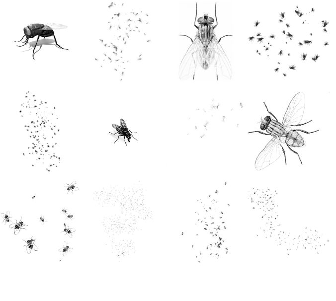 Ant brushes