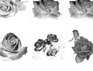 9 Rose photoshop brushes