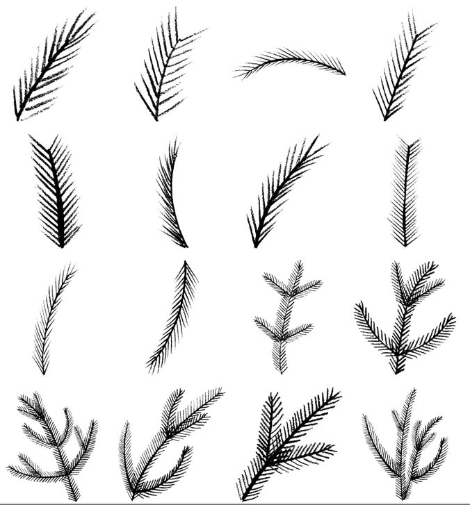 Pine Brushes – MEGA PACK