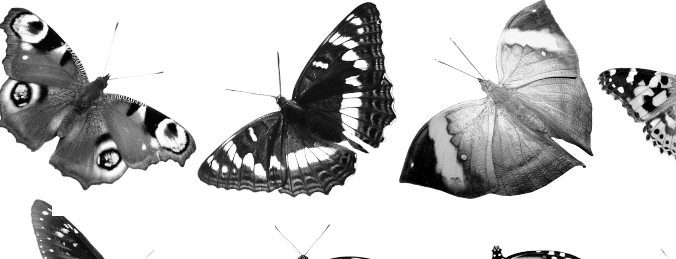 23 Free Butterfly Brushes