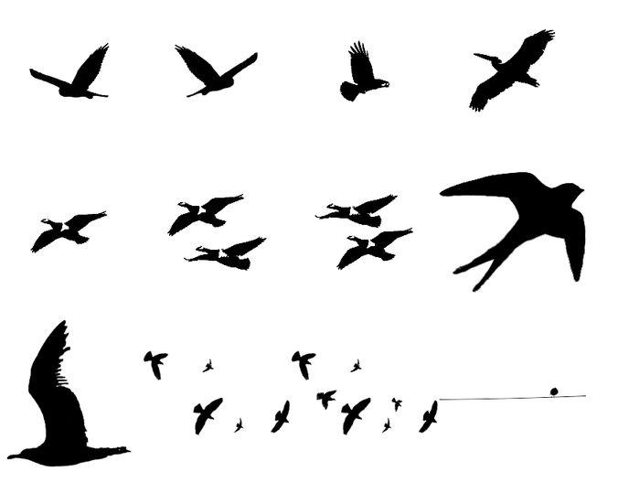 PS Bird brushes