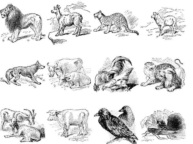 Animals Brushes Vol 1