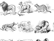 Animals Brushes Vol 1