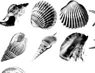 Shells brushes