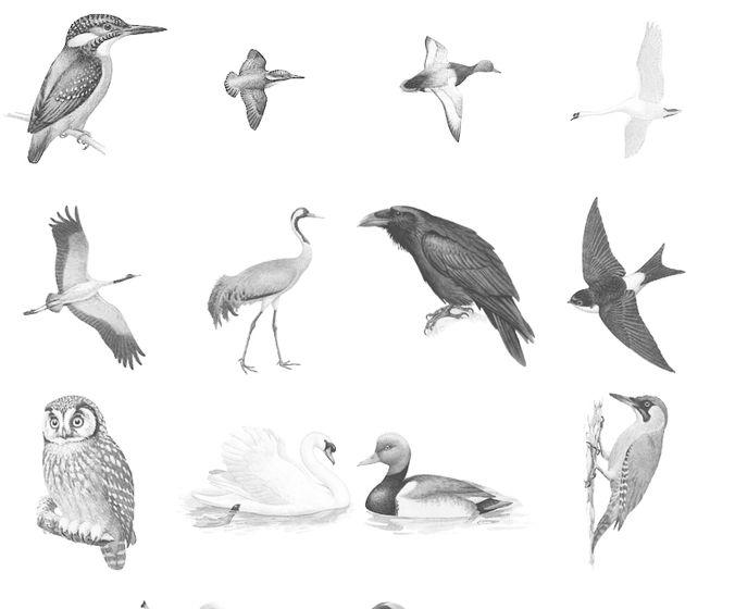 Bird brushes PS Set
