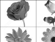 Flower brushes,