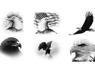 Eagle brush