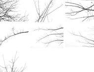 Wood Series Winter Branch