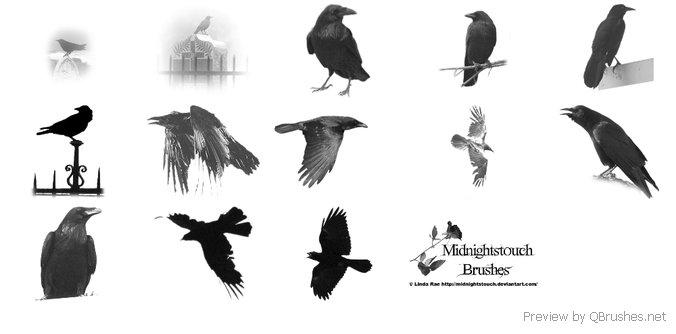 Raven PS