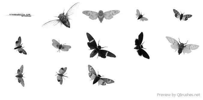 Cicadas brushes