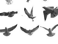 Flying bird brush