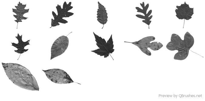 Tennessee Leaves