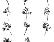Dill Brushes