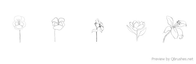 5 Hand-Drawn flowers