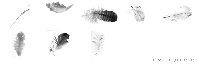 8 Feathers & wheat brushes