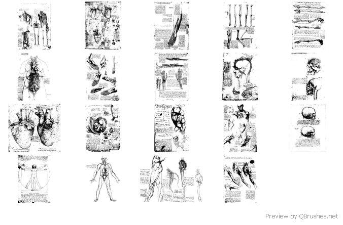 Davinci body sketches