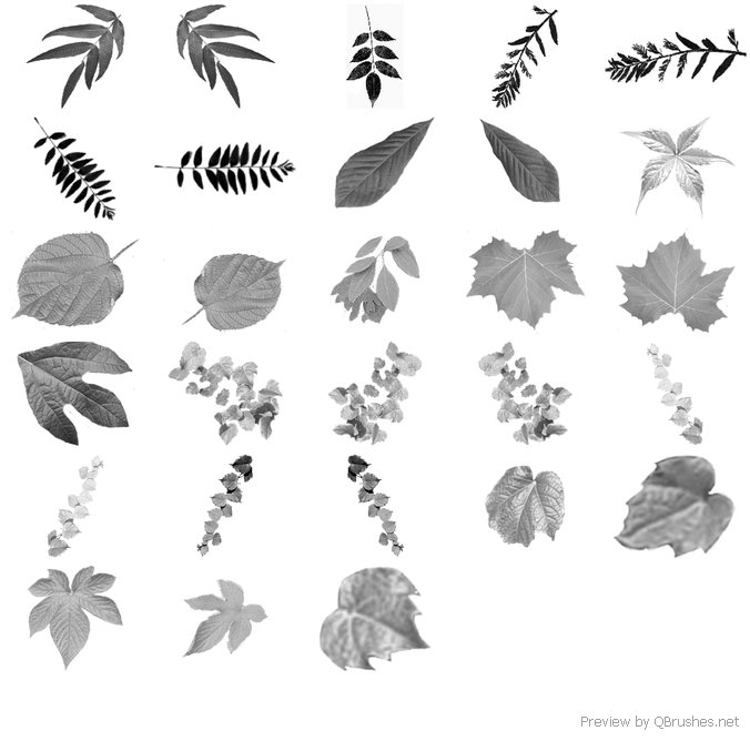 Leaves Ps Brushes
