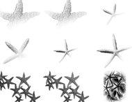 Starfish, Shells