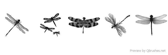 Dragonfly brush
