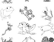 Frogs brushes
