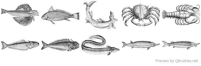 Sea Creatures vol.1