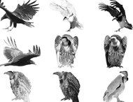 23 PS 7 vulture brushes