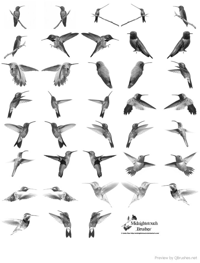 Hummingbirds brushes