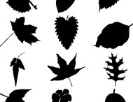80 leaf silhouettes