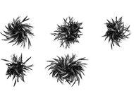 Plant Brushes