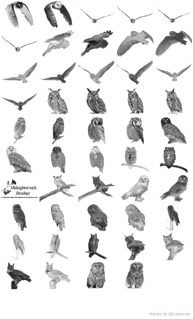 48 PS 7 Owl brushes