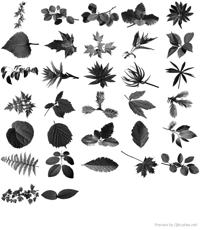 32 Ultra Leaf Brushes