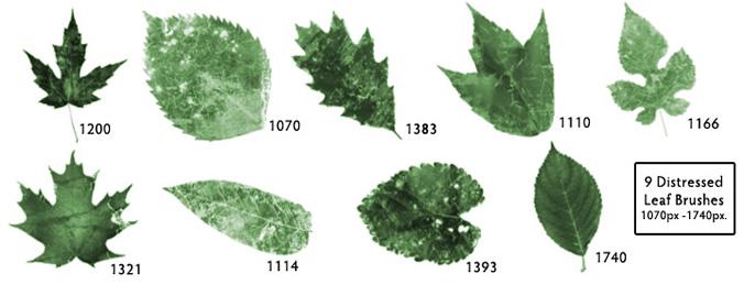 Distressed leaf photoshop brushes download - Clases de flores y sus nombres ...